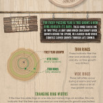 Wooden Furniture Facts