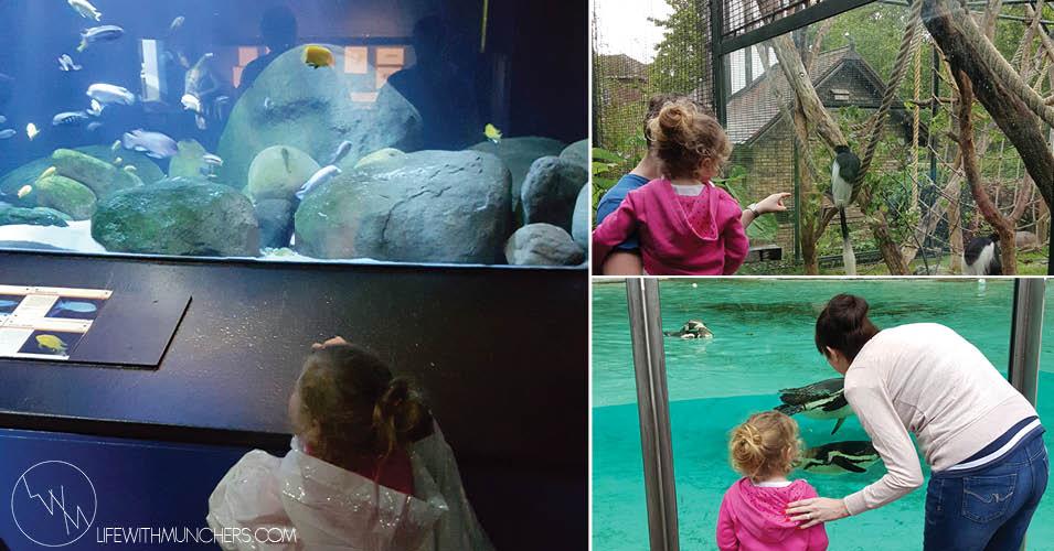 London zoo trip with kids 1